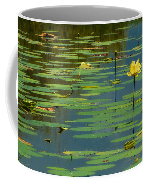 American Lotus Coffee Mug featuring the photograph American Lotus by Rich Leighton
