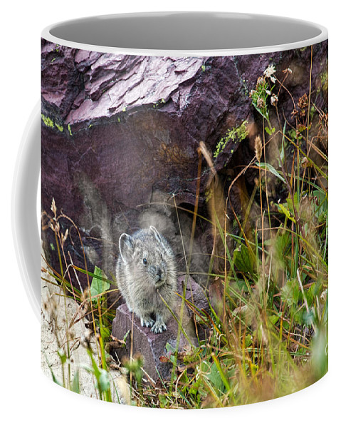 American Pika Coffee Mug featuring the photograph American Pika by Jemmy Archer