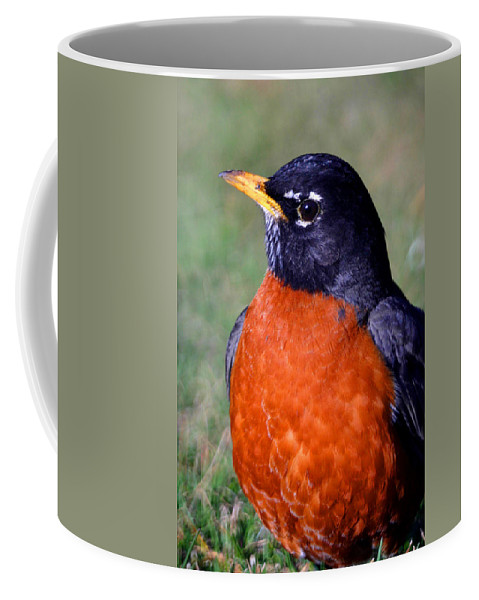 Bird Coffee Mug featuring the photograph American Robin by Karol Livote