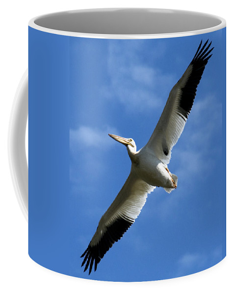 Bird Coffee Mug featuring the photograph American White Pelican Wings by Marilyn Hunt