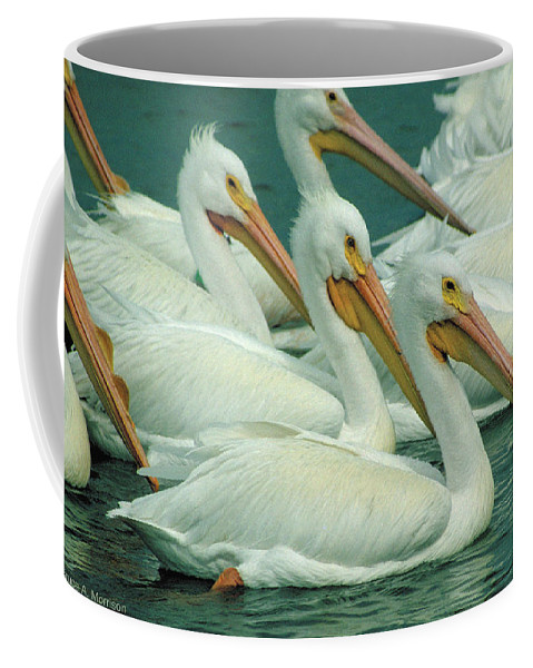 White Pelicans Coffee Mug featuring the photograph American White Pelicans by Bruce Morrison