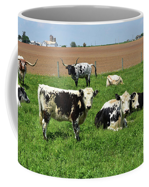 Cow Coffee Mug featuring the photograph Amish Farm With Spotted Cows And Cattle In A Field by DejaVu Designs