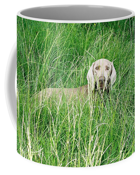 Grass Coffee Mug featuring the photograph Among The Grasses by Cindy New