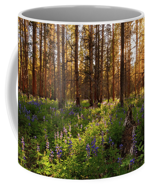 Collegiate Peaks Coffee Mug featuring the photograph Among The Lupines by Jennifer Grover