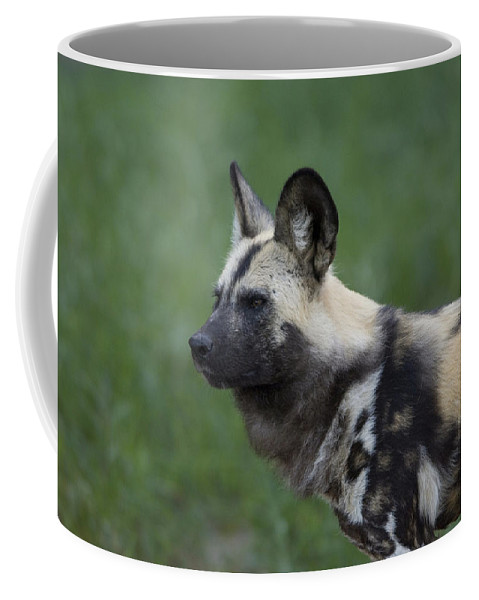 Photography Coffee Mug featuring the photograph An African Hunting Dog by Joel Sartore