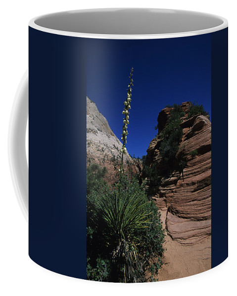 Perscott Coffee Mug featuring the photograph An Agave Plant In The Desert Landscapt by Stacy Gold