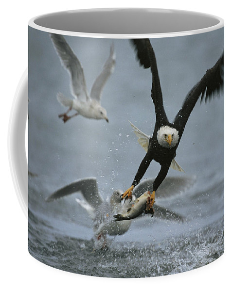 Animals Coffee Mug featuring the photograph An American Bald Eagle Grabs A Fish by Klaus Nigge