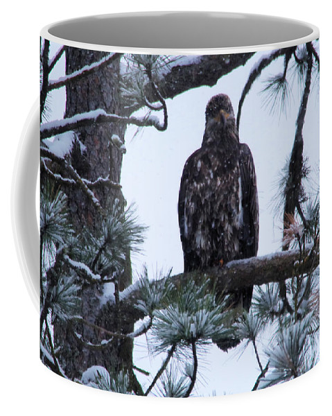 Bald Eagle Coffee Mug featuring the photograph An Eagle Gazing Through Snowfall by Jeff Swan