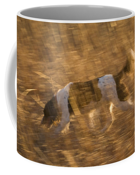 Nobody Coffee Mug featuring the photograph An English Springer Spaniel Points by Joel Sartore