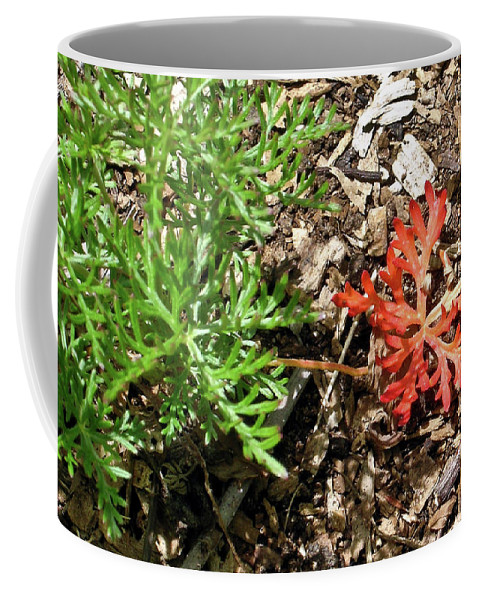 Oddity Coffee Mug featuring the photograph An Oddity Of Nature by Douglas Barnett