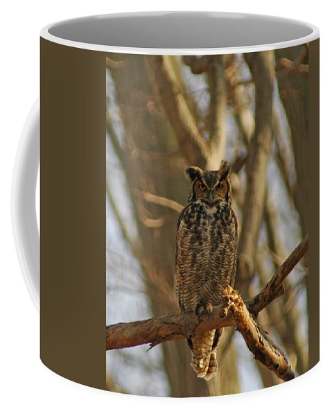An Owl Coffee Mug featuring the photograph An Owl by Raymond Salani III