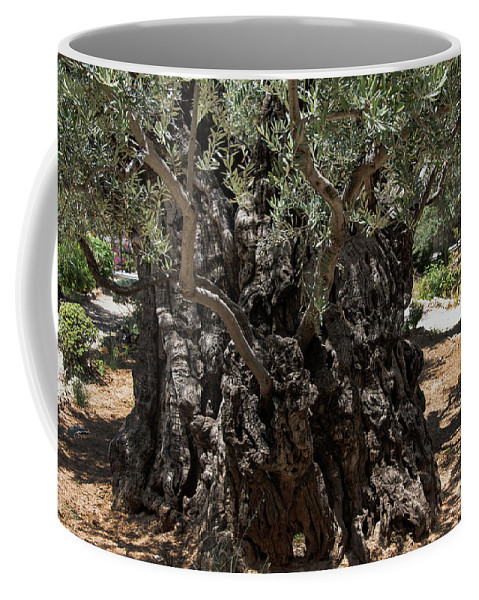 Ancient Olive Tree Coffee Mug featuring the photograph Ancient Olive Tree by Mae Wertz