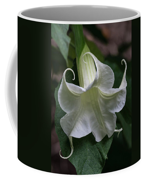 Flower Coffee Mug featuring the photograph Angel Trumpet by Bruce Frye