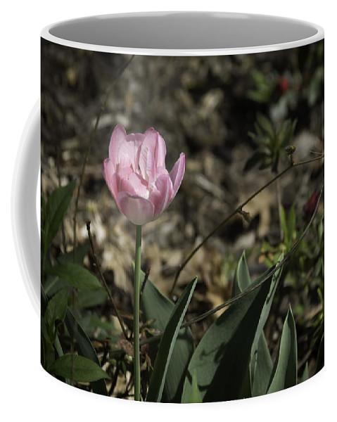 Flowers Coffee Mug featuring the photograph Angelique Peony Tulip by Teresa Mucha