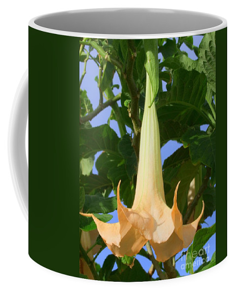 Mary Deal Coffee Mug featuring the photograph Angels Trumpet by Mary Deal