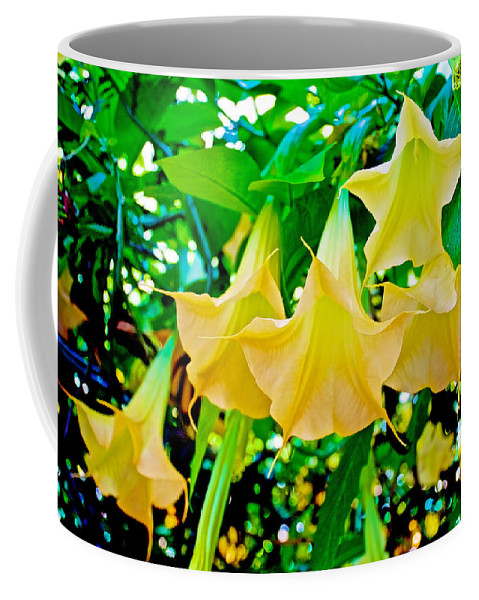 Angel's Trumpets In February At Pilgrim Place In Claremont Coffee Mug featuring the photograph Angel's Trumpets At Pilgrim Place In Claremont-california by Ruth Hager