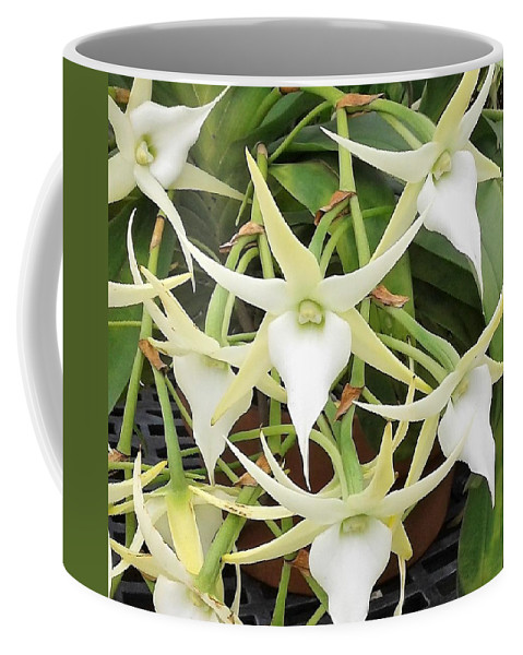 Orchidacea Coffee Mug featuring the photograph Angraecum Crestwood by Janice Dunlap