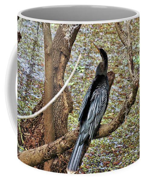 Animal Coffee Mug featuring the photograph Anhinga 2 by John Trommer
