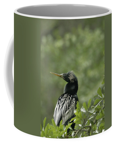 Anhinga Coffee Mug featuring the photograph Anhinga by Phill Doherty