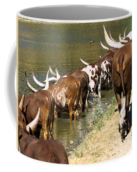 Animals Coffee Mug featuring the photograph Ankole-watusi Cattle by Richard Thomas