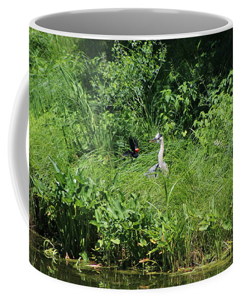Marsh Coffee Mug featuring the photograph Annoyed - Heron and Red Winged Blackbird 5 of 10 by Colleen Cornelius