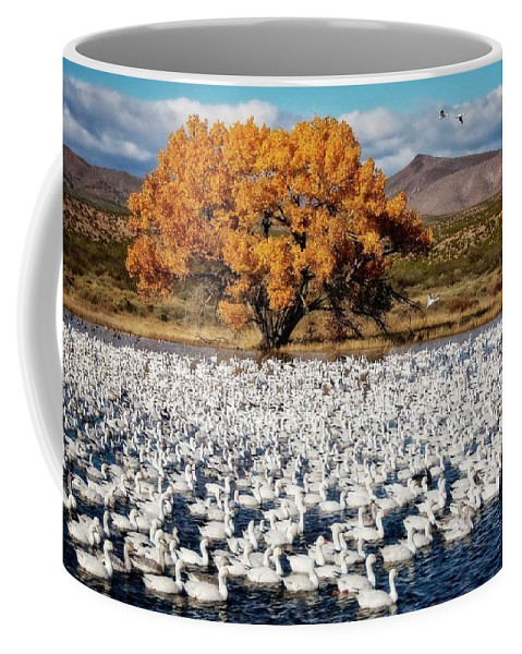 Nature Coffee Mug featuring the photograph Annual Snow Geese Meet-up, Bosque Del Apache, New Mexico by Zayne Diamond Photographic