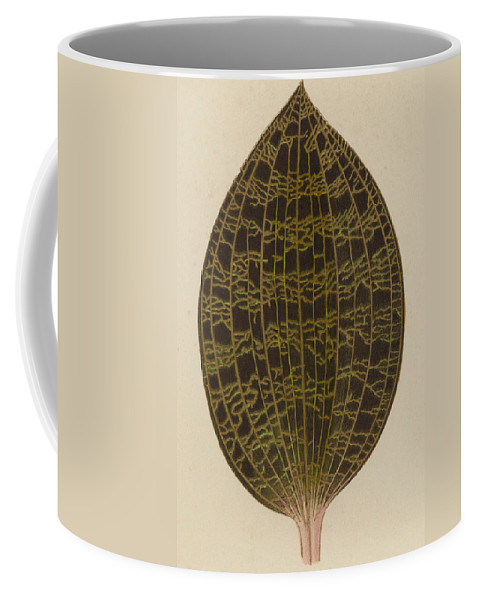 Leaf Coffee Mug featuring the painting Anoectochilus Lowii by English School