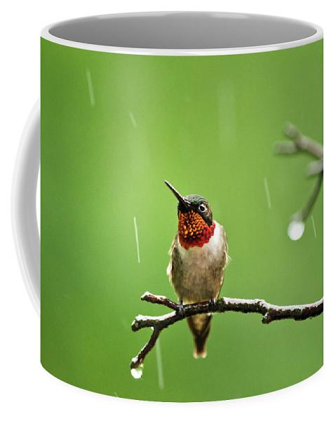 Hummingbird Coffee Mug featuring the photograph Another Rainy Day Hummingbird by Christina Rollo
