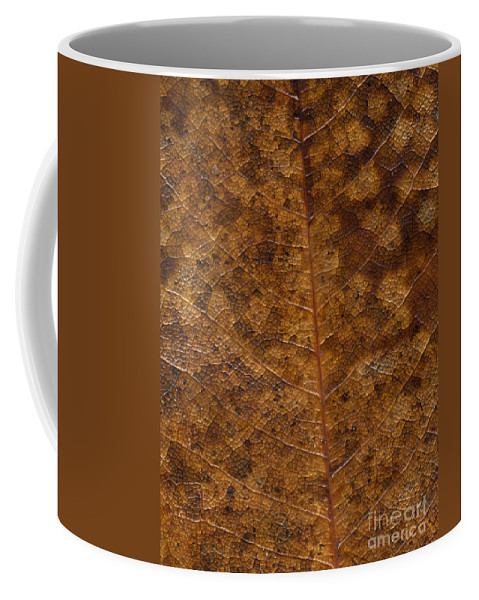 Nature Coffee Mug featuring the photograph Another Touch Of Fall by Richard Rizzo