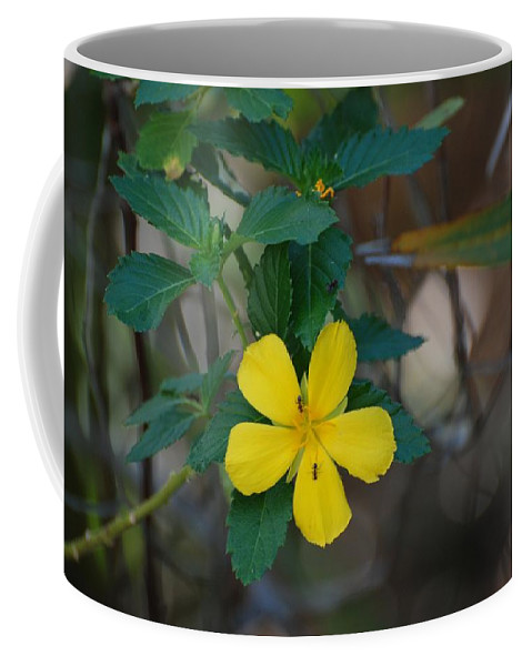 Macro Coffee Mug featuring the photograph Ant Flowers by Rob Hans