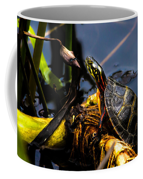 Turtles Coffee Mug featuring the photograph Ant Meets Turtle by Bob Orsillo