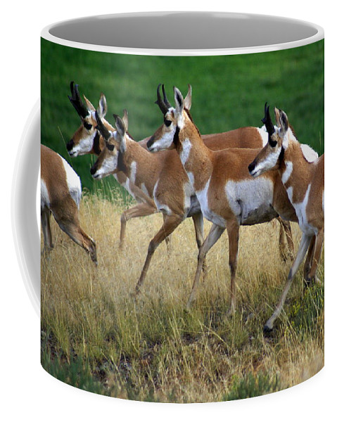 Wildlife Coffee Mug featuring the photograph Antelope 1 by Marty Koch