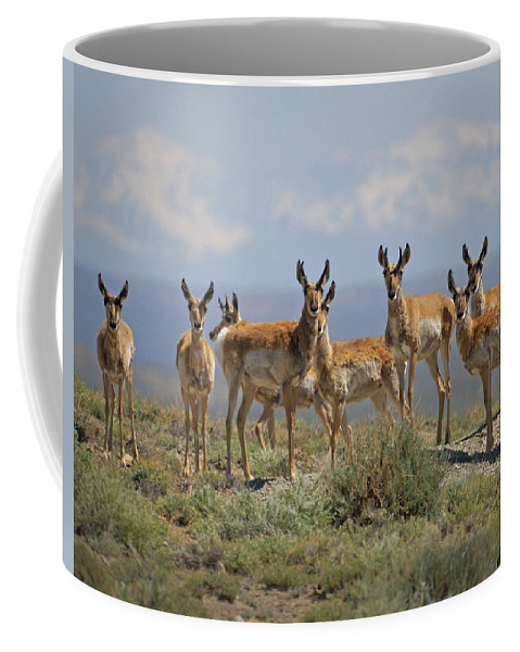 Antelope Coffee Mug featuring the photograph Antelope by Heather Coen