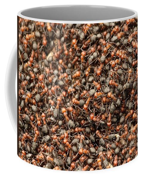 Ants Coffee Mug featuring the photograph Ants by DeeLon Merritt
