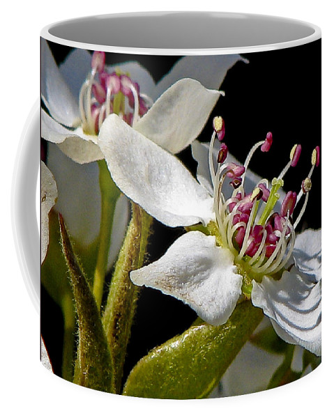 Flower Coffee Mug featuring the photograph Apple Blossem In Sunlight by Ches Black