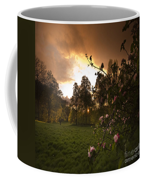 Apple Tree Coffee Mug featuring the photograph Apple Blossom by Angel Tarantella