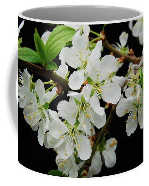 Apple Coffee Mug featuring the photograph Apple Blossoms 3 by Michael Peychich