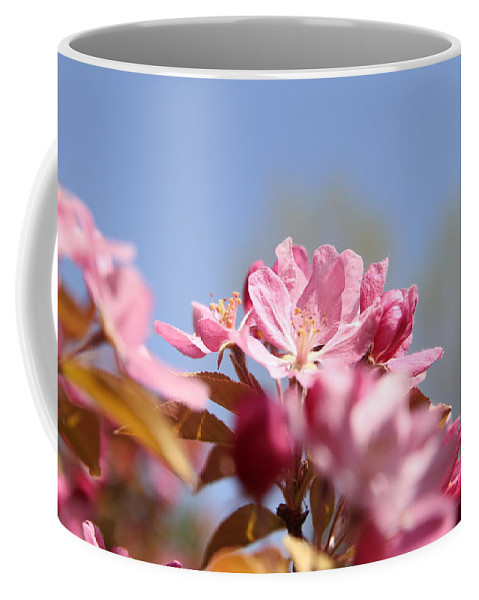 Blossom Coffee Mug featuring the photograph Apple Blossoms by Aliza Anderson