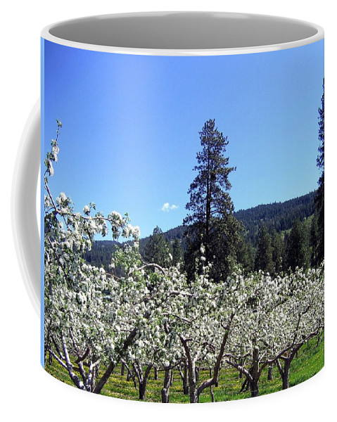 Orchard Coffee Mug featuring the photograph Apple Orchard In Bloom by Will Borden