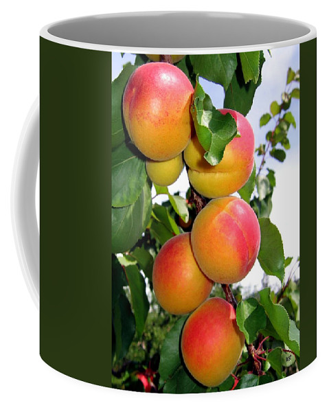 Apricots Coffee Mug featuring the photograph Apricots by Will Borden
