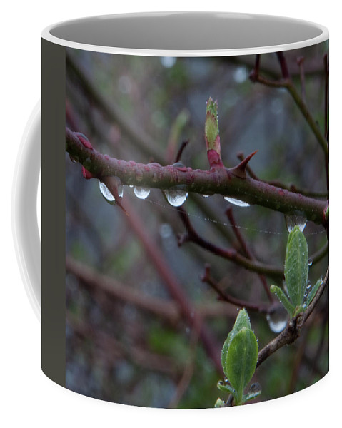 Photography Coffee Mug featuring the photograph April Showers by Steven Natanson