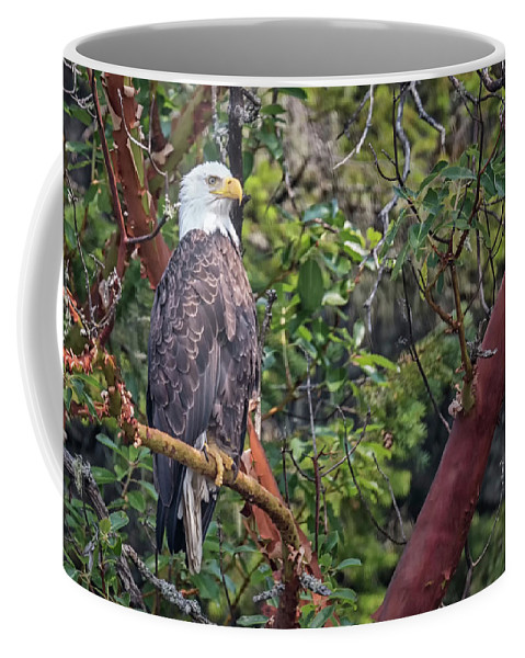 Bald Eagle Coffee Mug featuring the photograph Arbutus Eagle by Randy Hall