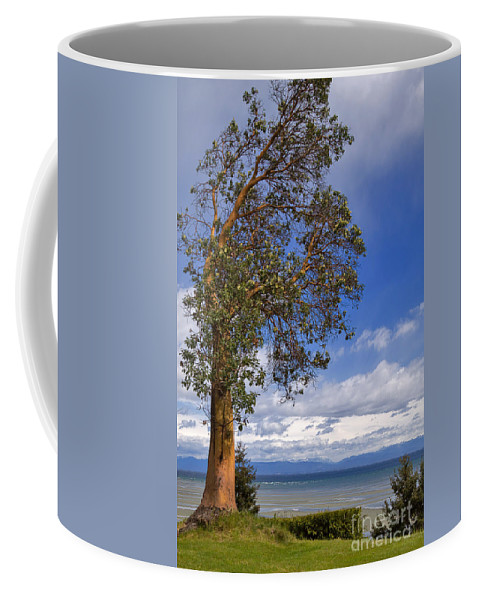 Tree Coffee Mug featuring the photograph Arbutus Tree At Rathtrevor Beach British Columbia by Louise Heusinkveld