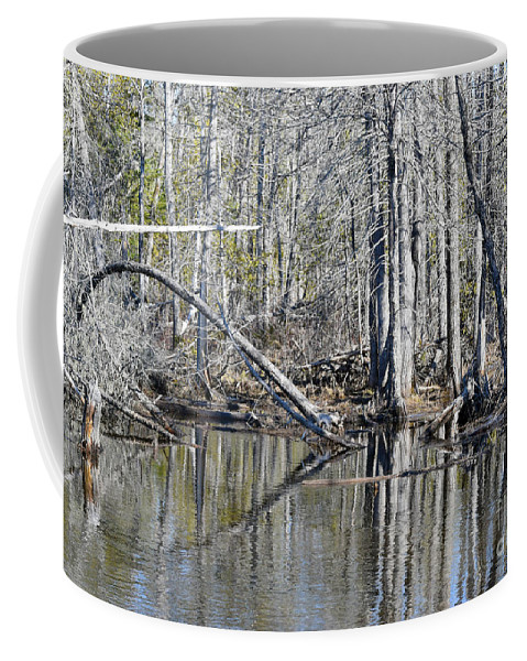 Wetlands Coffee Mug featuring the photograph Arch And Reflections by William Tasker