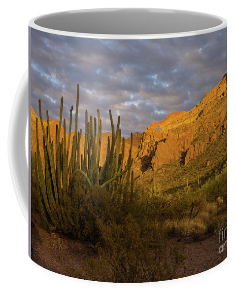 Ajo Range Coffee Mug featuring the photograph Arch Canyon 3 by Tracy Knauer