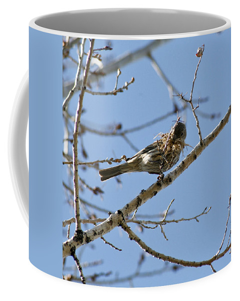 Bird Coffee Mug featuring the photograph Architect by Marilyn Hunt