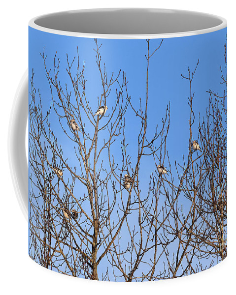 Arctic Bunting Coffee Mug featuring the photograph Arctic Buntings by William Tasker
