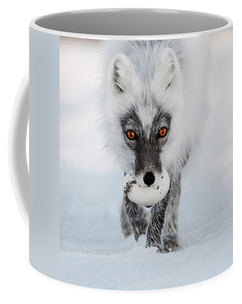 Arctic Fox And Snow Goose Egg Coffee Mug For Sale By Sergey Gorskov