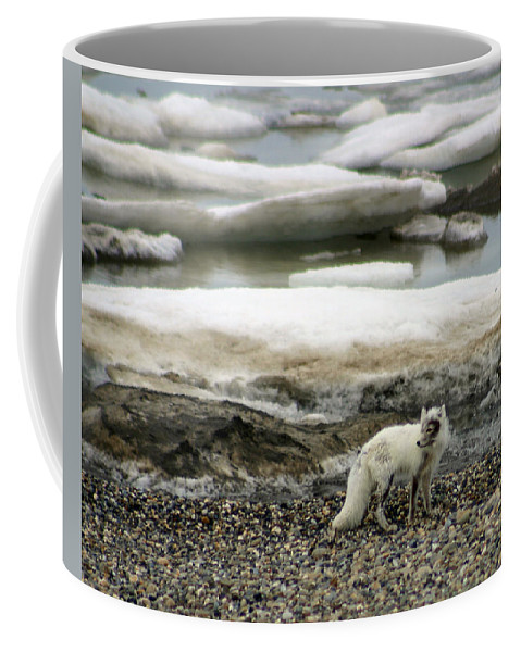 Fox Coffee Mug featuring the photograph Arctic Fox By Frozen Ocean by Anthony Jones