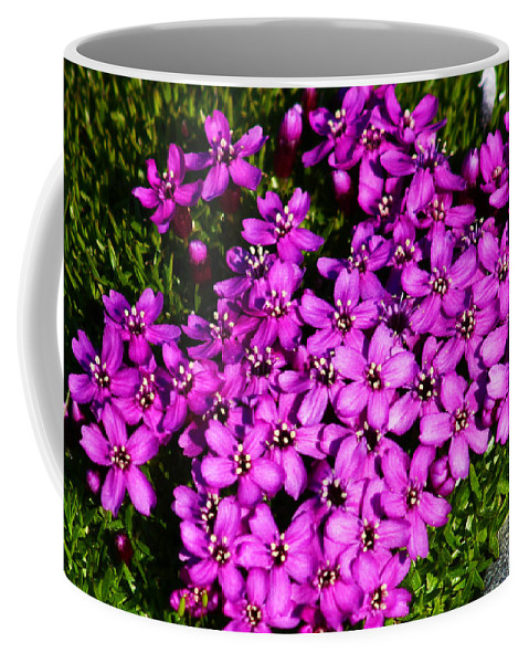 Arctic Coffee Mug featuring the photograph Arctic Wild Flowers by Anthony Jones